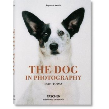 The dog in photography 1839 today